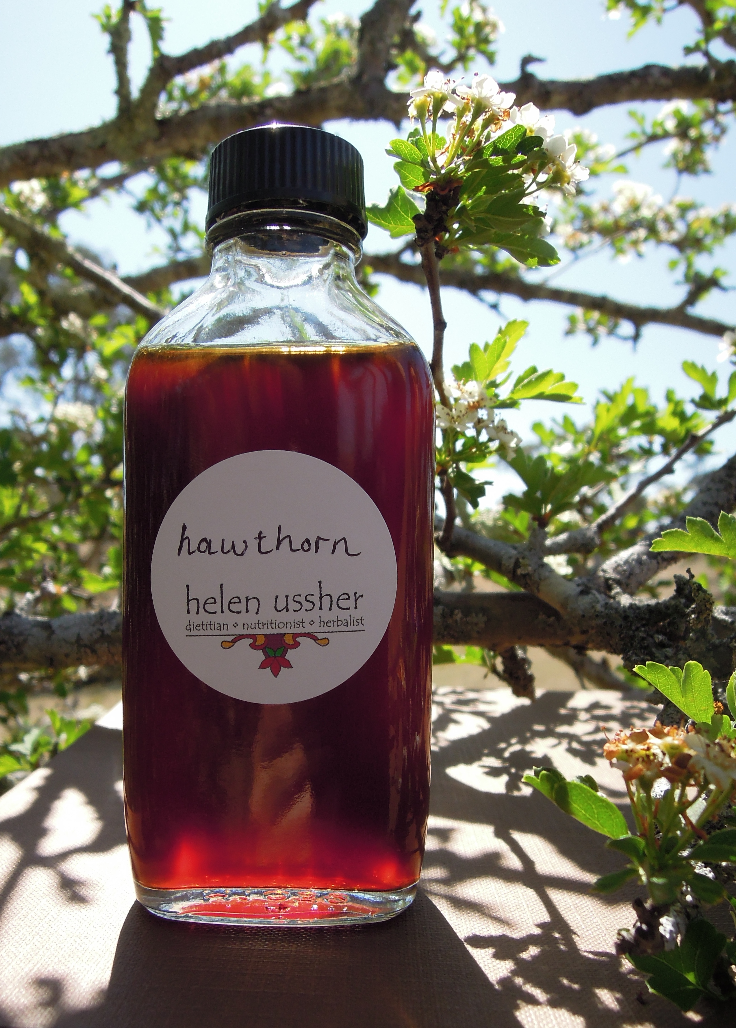 how to make hawthorn berry tincture